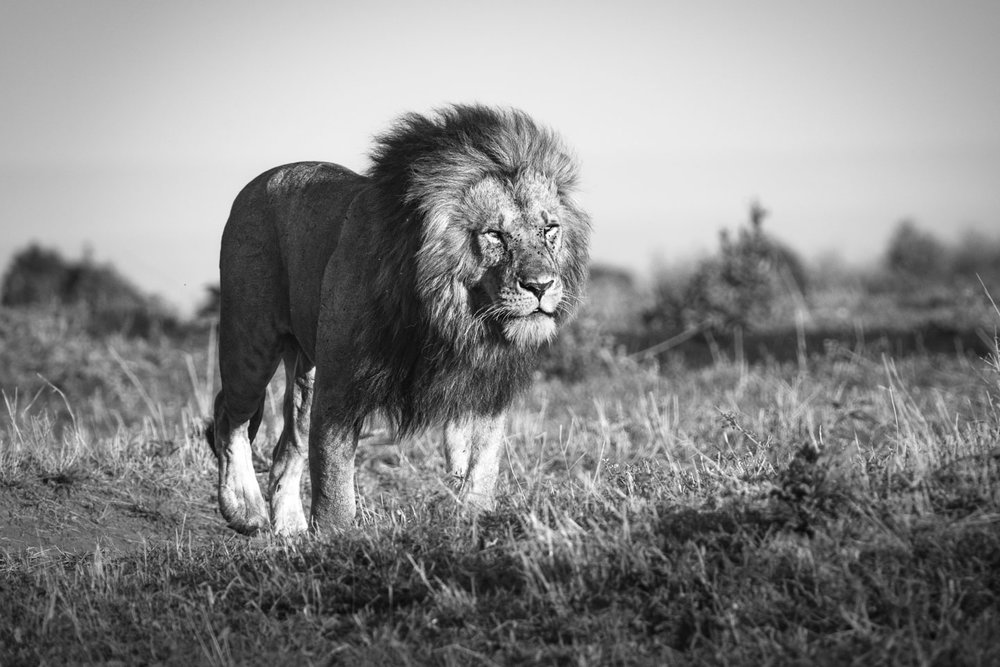 AF-C (AI Servo) is best for tracking a moving subject like wildlife