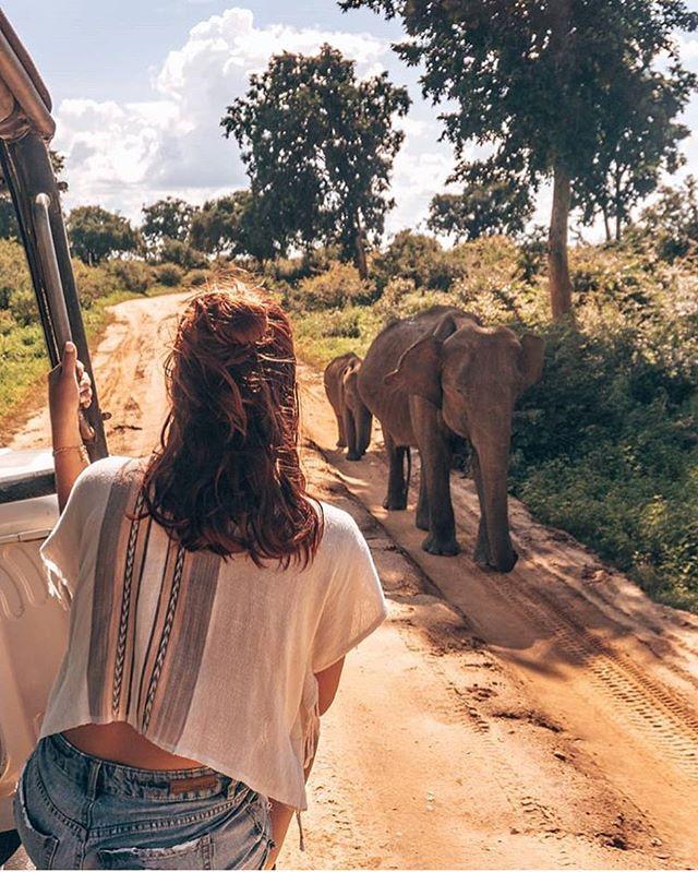 Life is the most spectacular show on earth • ❤️@yulneveroamalone . . . . . . . #srilanka #wildlifephotography  #passionpassport #sheisnotlost #losttribemag #worlderlust #adventureculture #seetheworld #traveladdict #roamtheplanet #welltravelled #awakethesoul #dreamdestination #lonelyplanet  #travelcouple  #passportready #awesomeearth #natgeotravel  #naturelover #travelawesome #darlingescapes #bbctravel #wildlifeconservation #traveldeeper #travelstoke #elephants #couplesgoals #travelbug #keepexploring