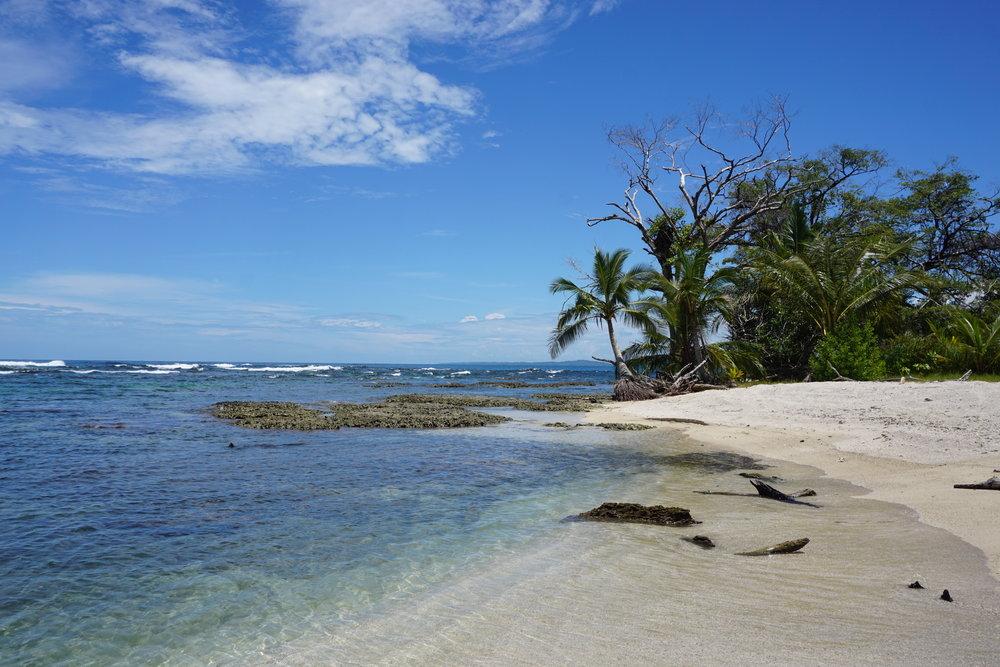 Turtle Beach House - Beachfront B&B   Bocas del Toro, Panama