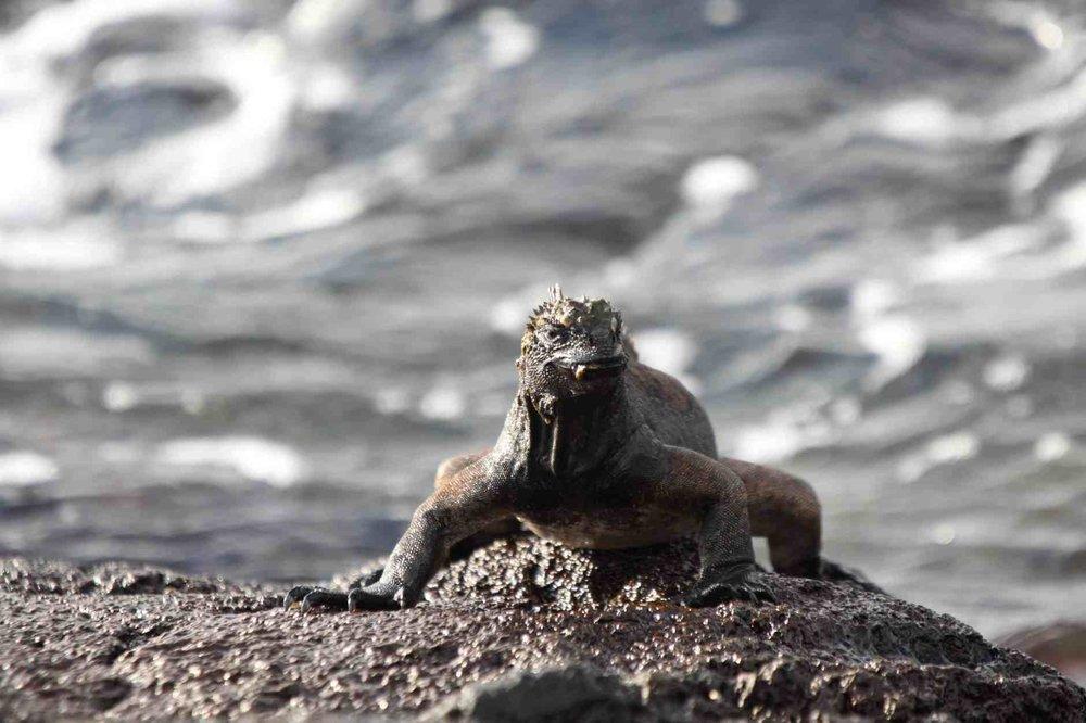 Galapagos Islands - Travel Story   Ecuador's Jurassic Park