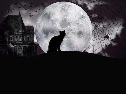 halloween-3696571-340.jpg