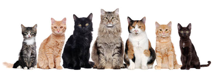 group-of-cats.jpg