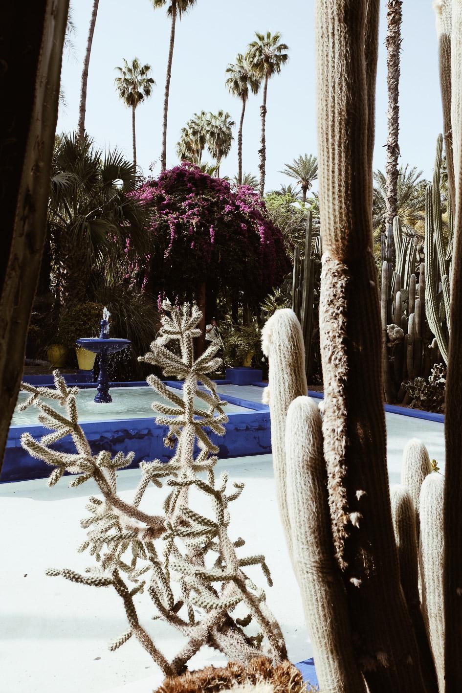 Carnet Sauvage - Blog voyage Marrakech, visiter le Jardin Majorelle