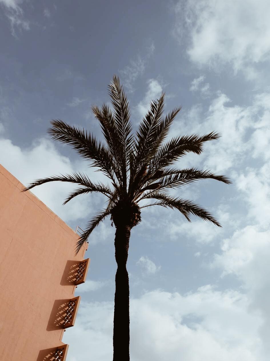 Carnet Sauvage - Blog voyage Marrakech, se loger hotel Méridien n'fis
