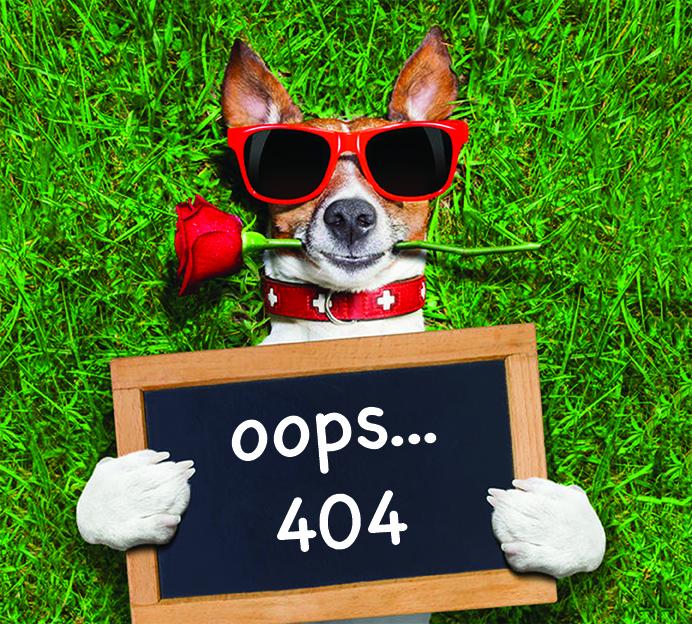 404_Dog.jpg