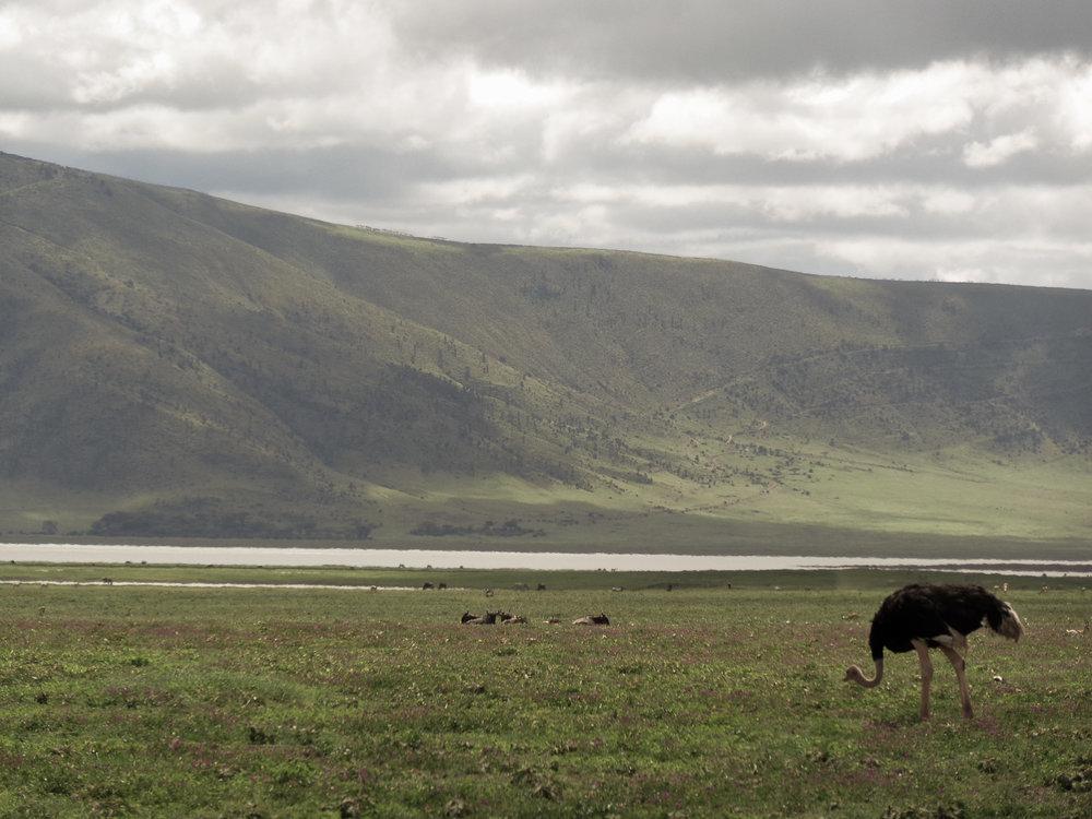 Ngorongoro Conservation Area -