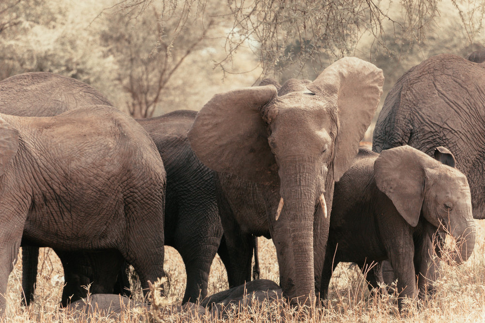 Elephants and History -