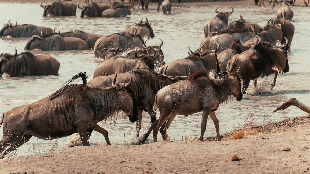 Serengeti National Park -