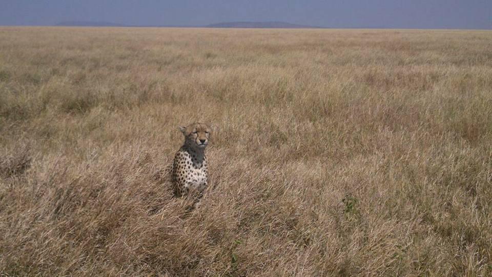 safari_53.jpg