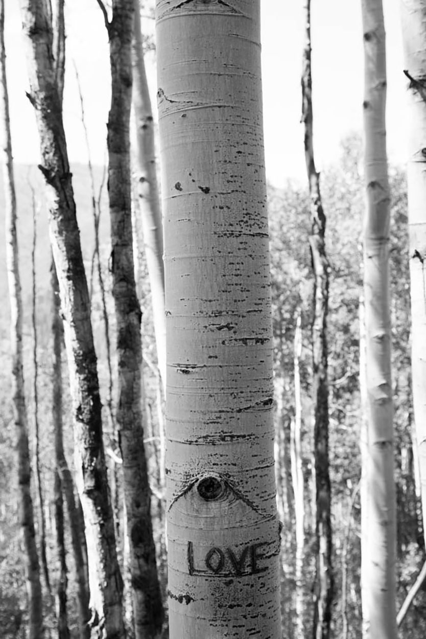 Love tree, Aspen.jpg