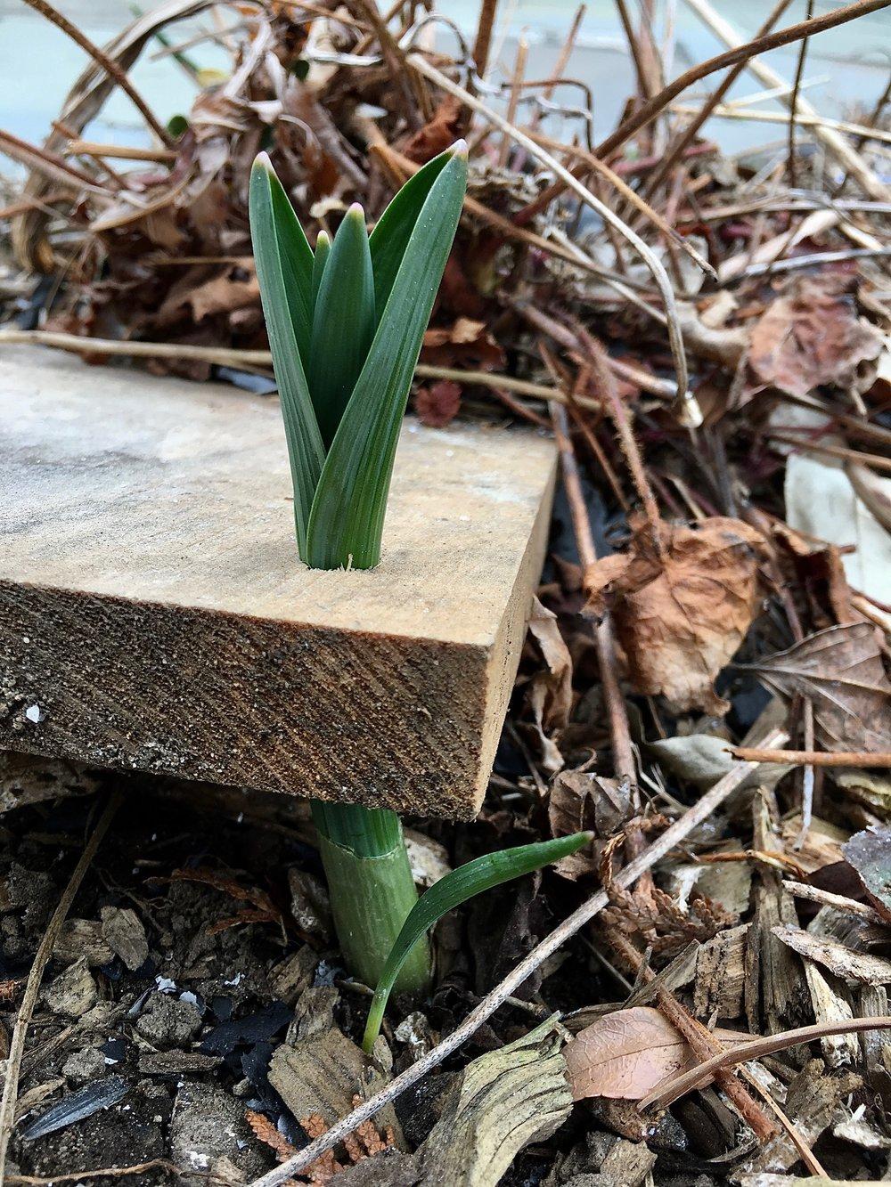 springbulb.jpg