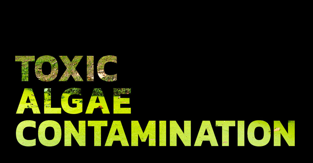 toxic-algae-contamination.jpg