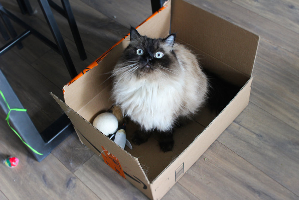An example of a cat inside a box. This is Sebastian, to be honest I just wanted an excuse to have a picture of him on this post. Isn't he adorable!? He is indeed a piece of art if you ask me.
