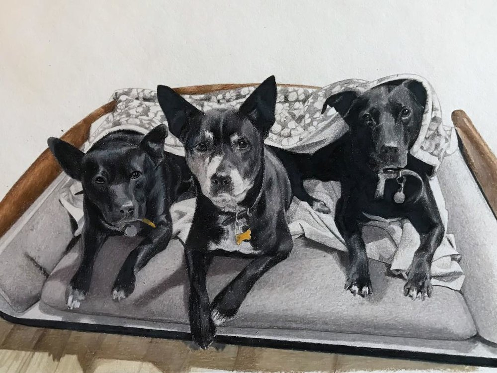 3 dogs portrait.jpg