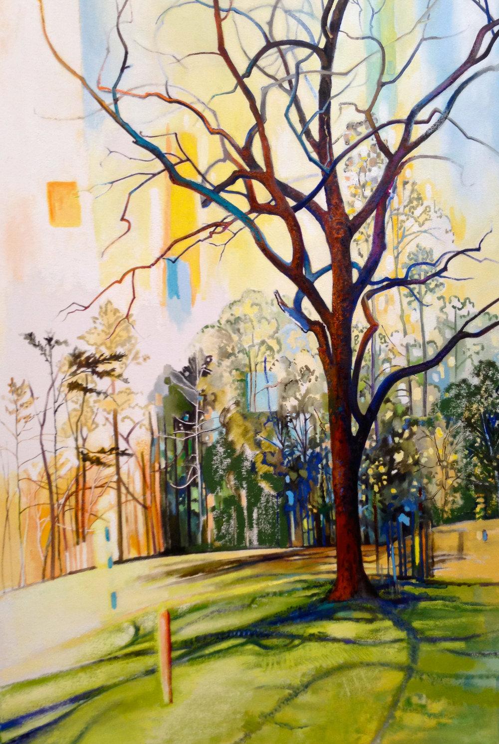 John's Walnut Tree