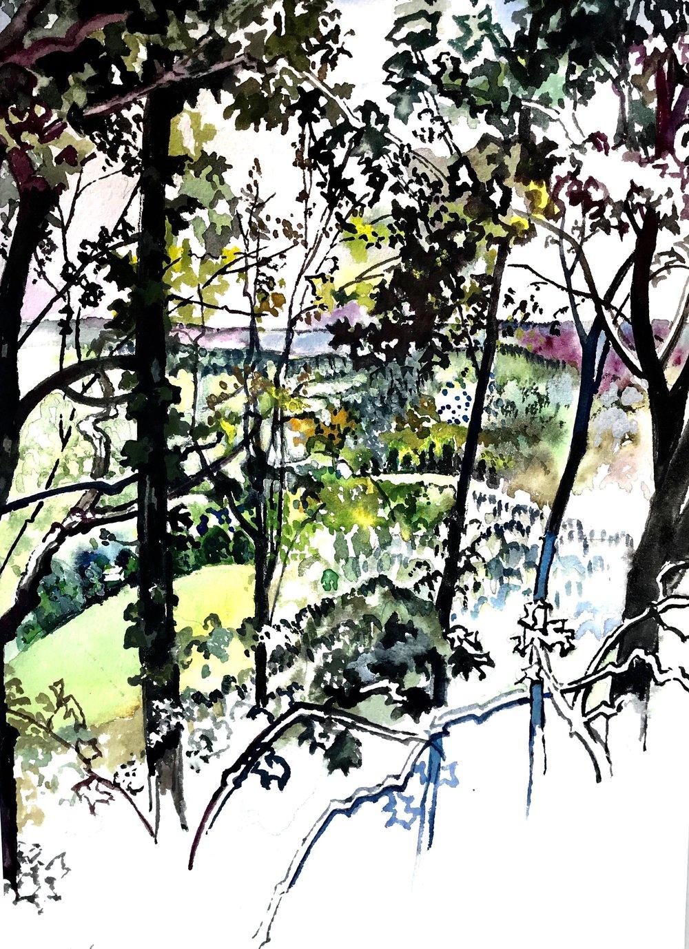 Trees, Blue Ridge Mountains
