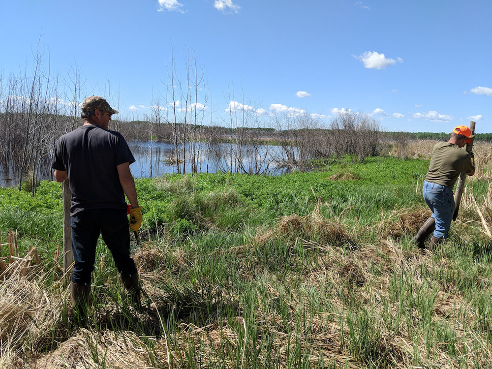 - The Cherry trees will be watered from a pond on the property