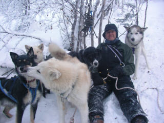 56-friendly-alaska-dogs-huskie.jpg
