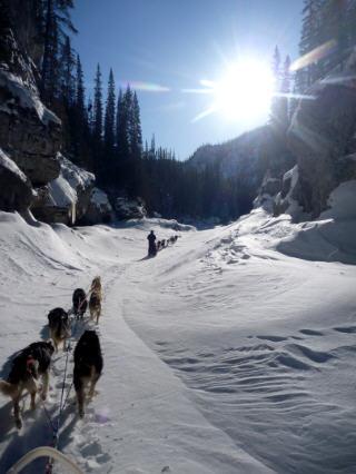 79-dog-sled-alaska-yukon.jpg