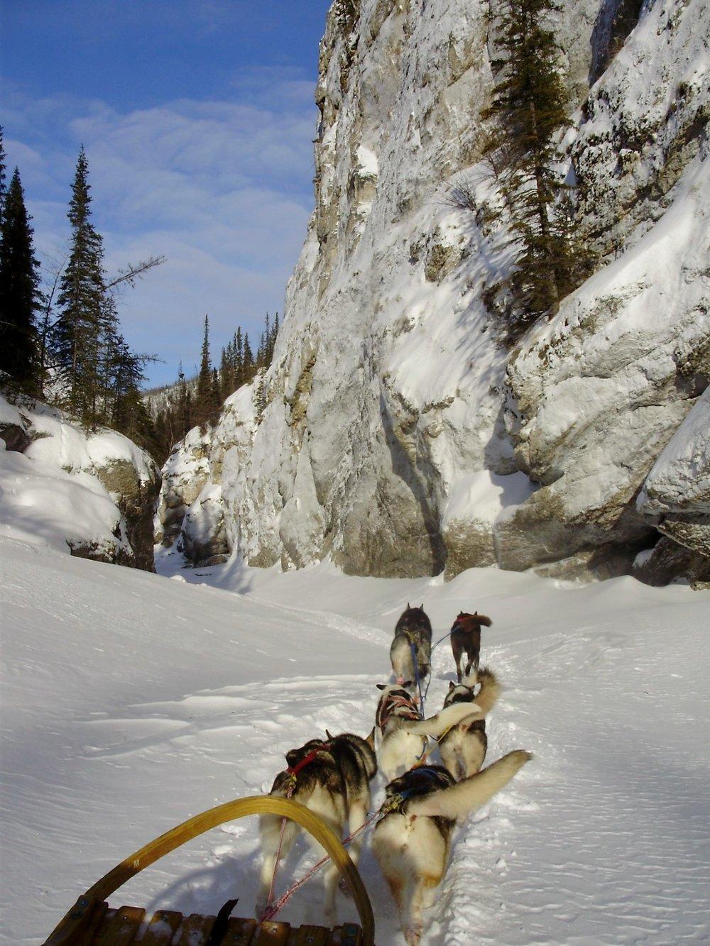 Dog sledge in the Alaska Yukon drainage