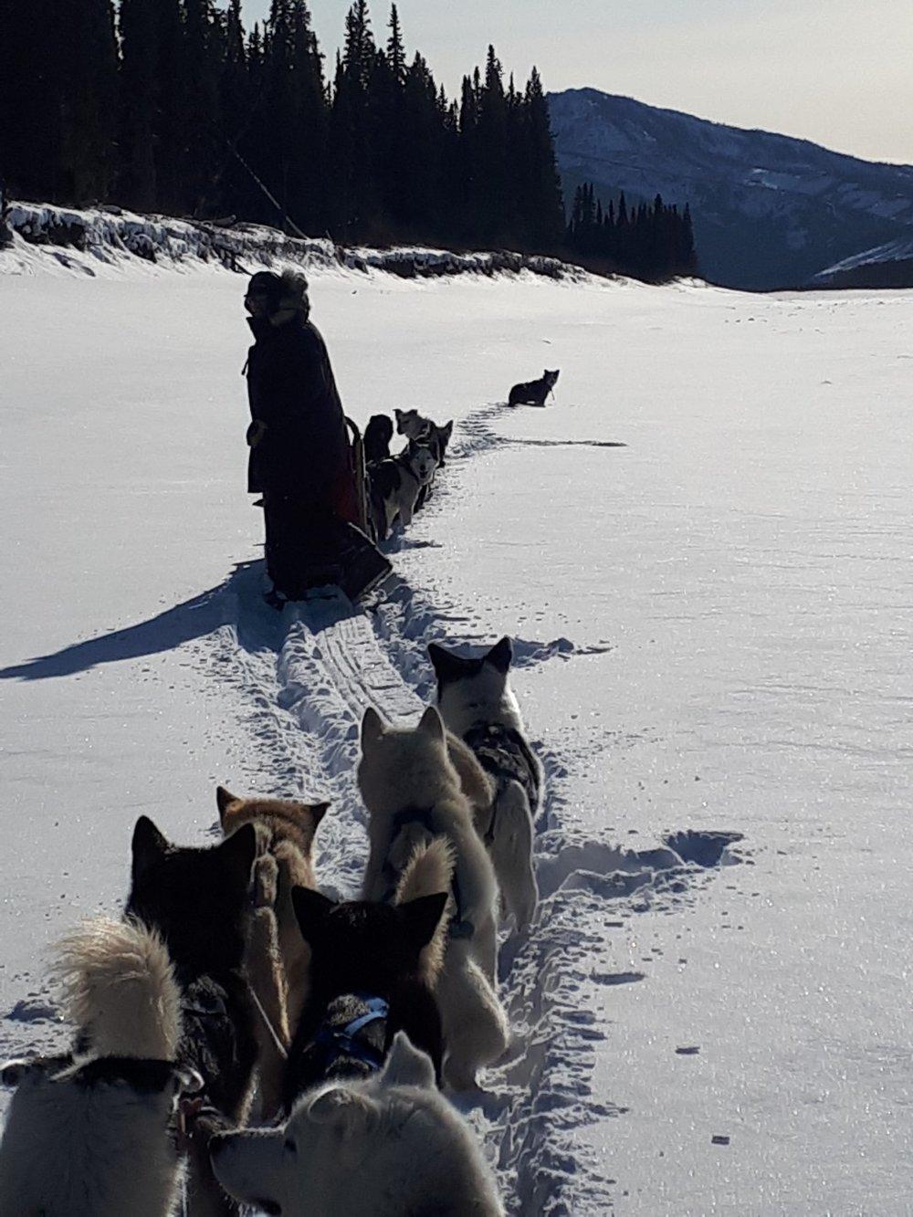 Dog sled Eagle, Alaska, Yukon