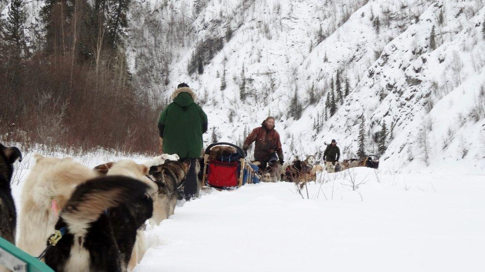 dog sledge remote wilderness Eagle, Alaska, Yukon