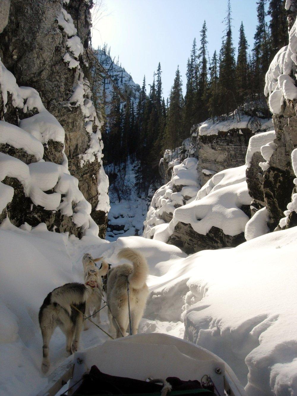 Dog Sledge National Park Service Yukon Charley Rivers Preserve