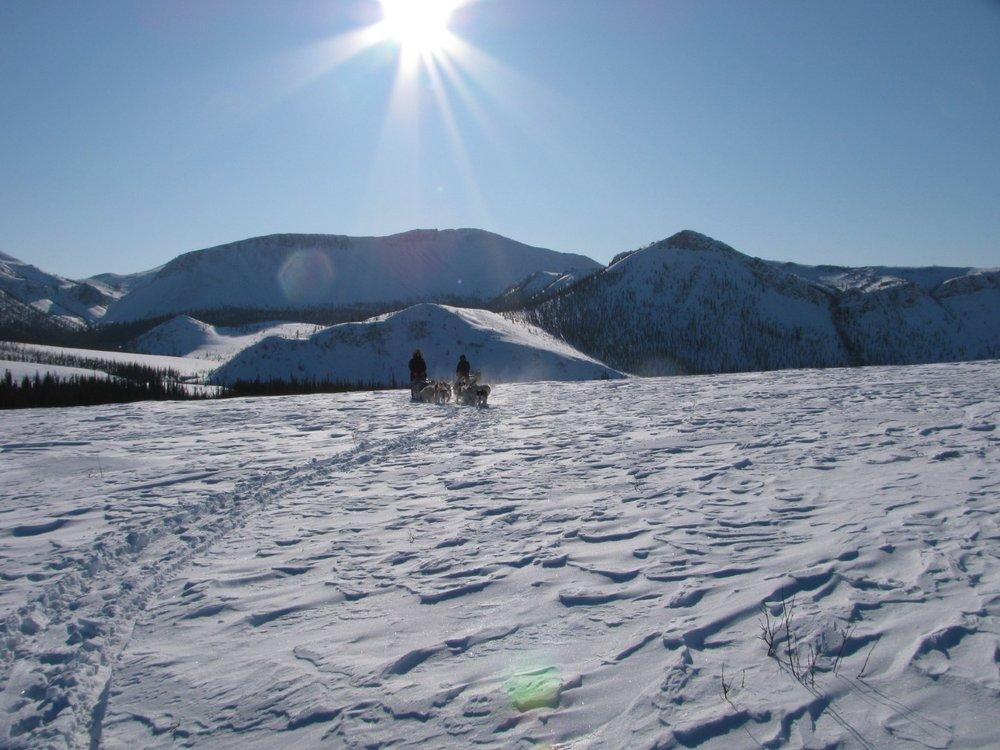 Dog Mush National Park Service Yukon Charley Rivers Preserve