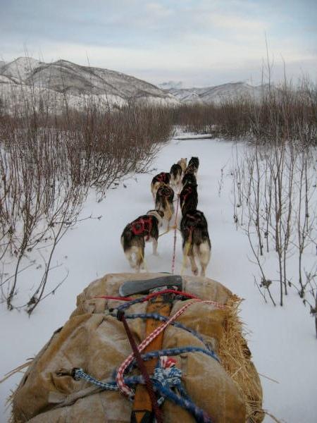 Dog mush Eagle, Alaska, Yukon River