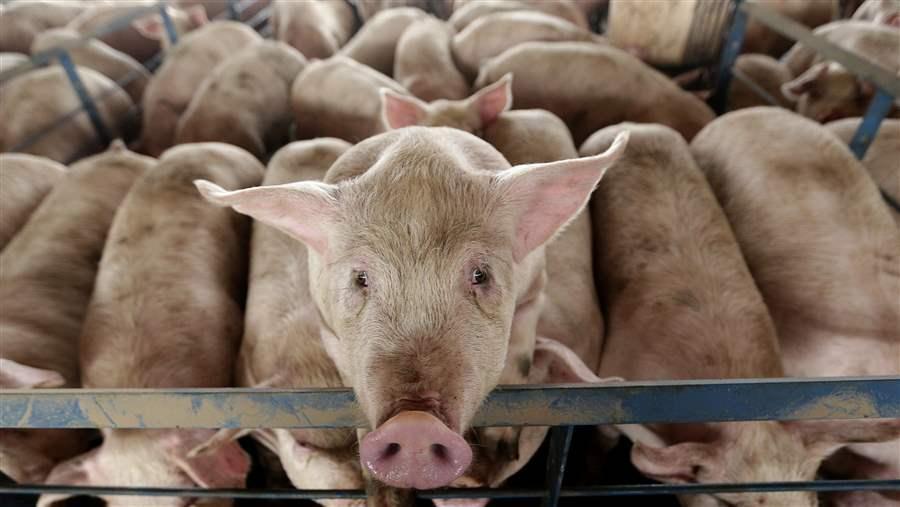 sl_animal_welfare_laws_16x9.jpg