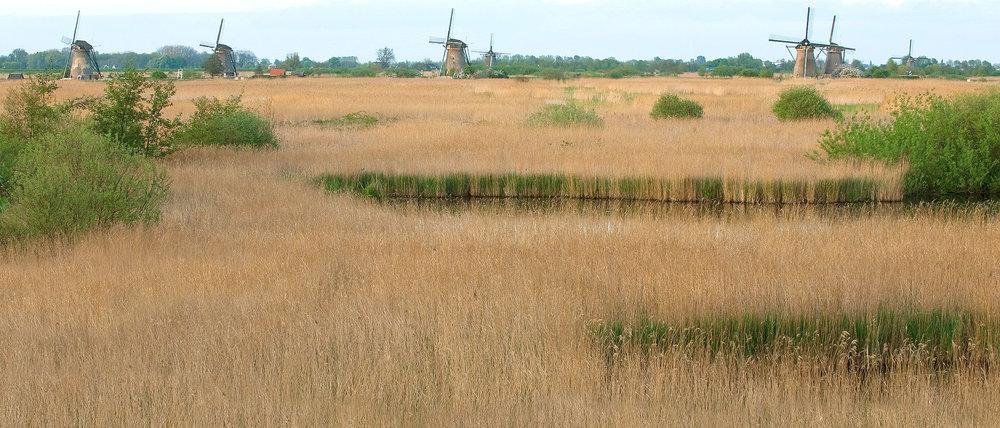 VOOGT-rietdekkers-Delft-rieten-dak-11.jpg