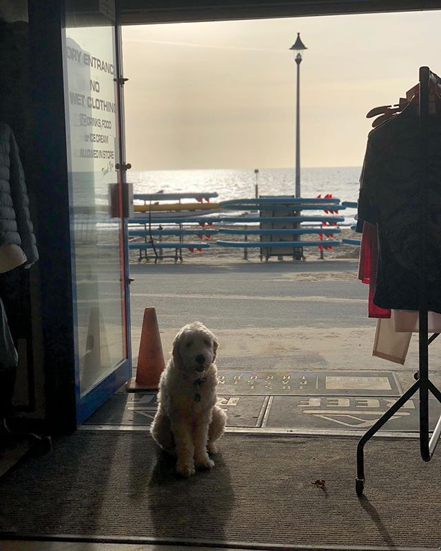 My favourite kind of customer. #surfschool #surfshop #supportlocal  #dogoftheday