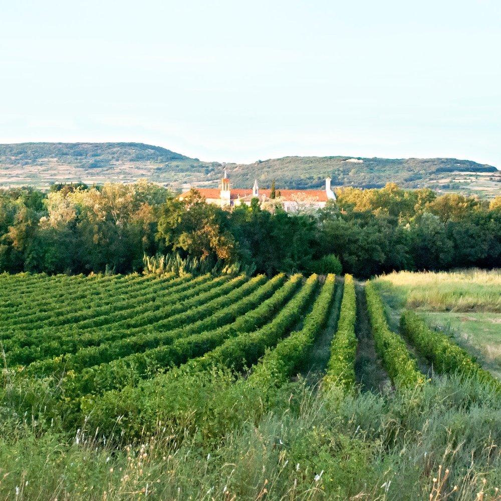Vins -