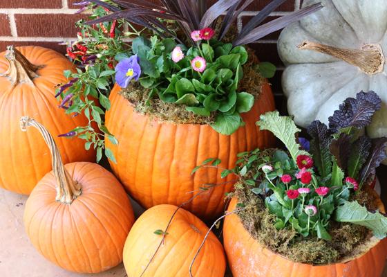 Pumpkin-Planter-Project-RV-THD-560x400.jpg