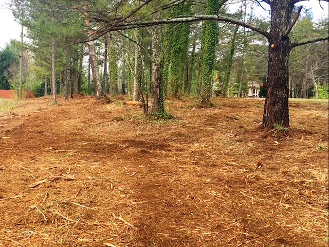 forest.mulching.hvf.jpg
