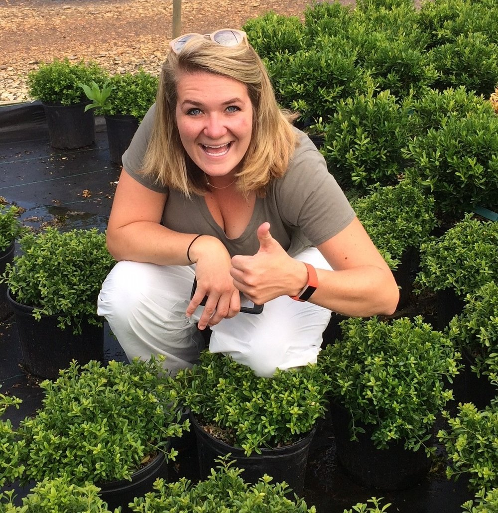 Lindsay inspects container boxwood plants at Saunders Brothers Nursery