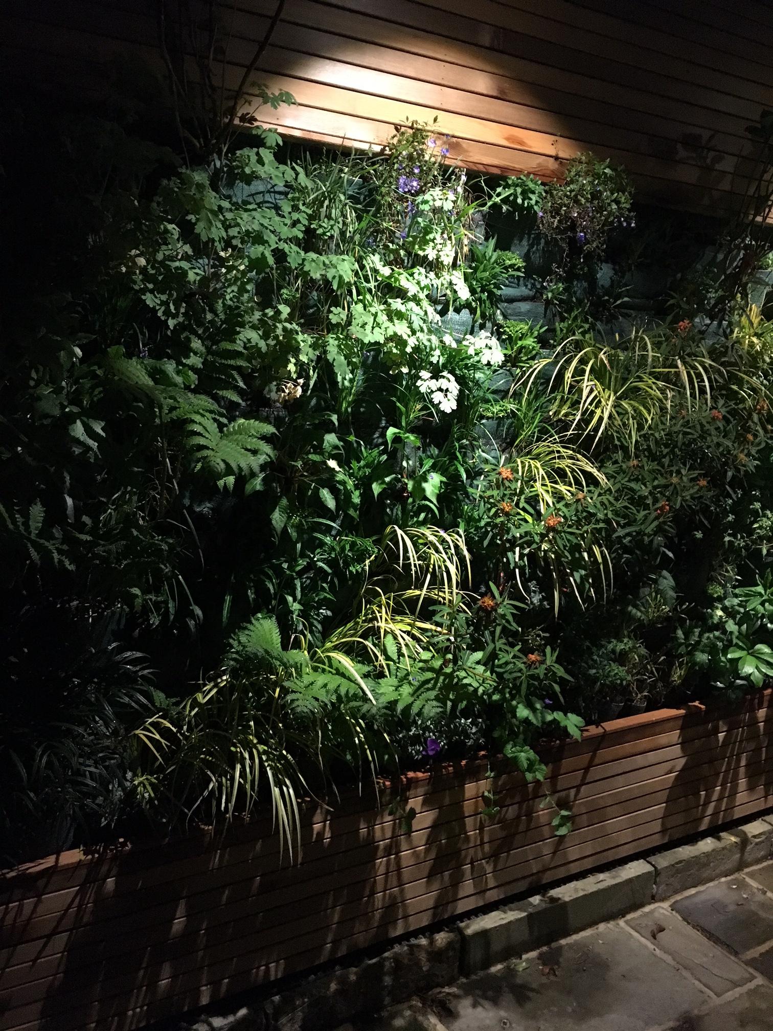Living wall at night 2
