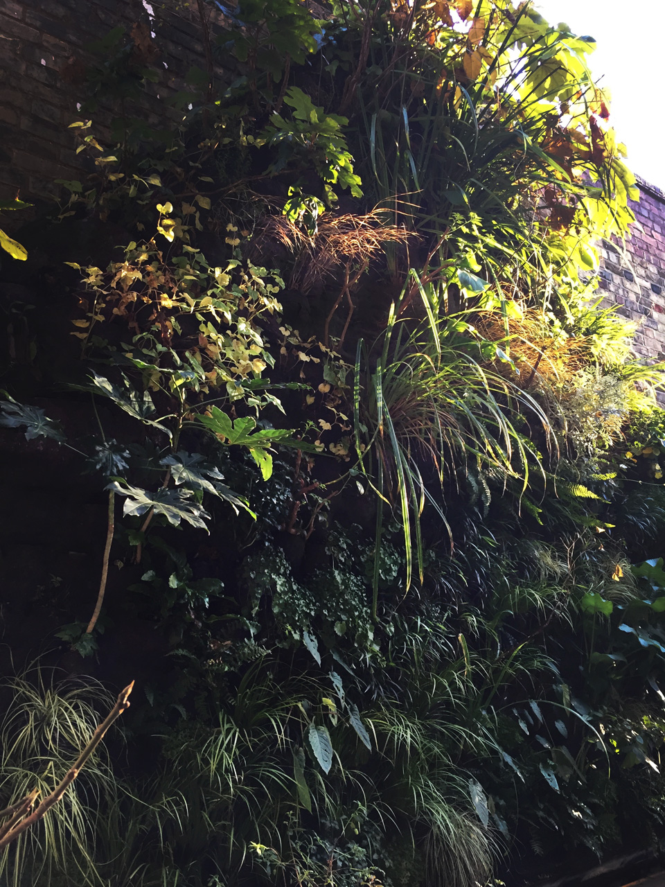 Living wall in Crouch End by The Landscape Architect