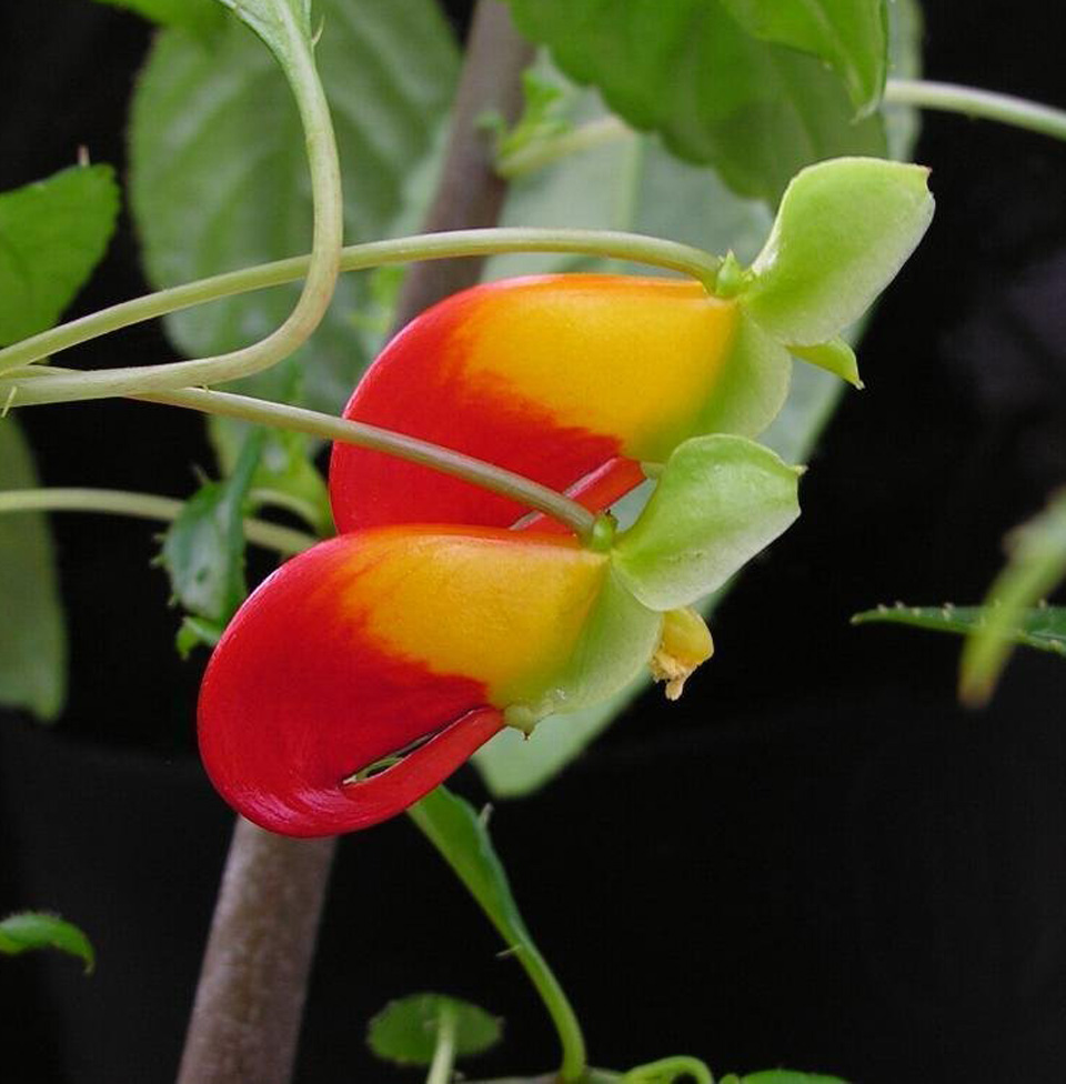 parrot-plant.jpg