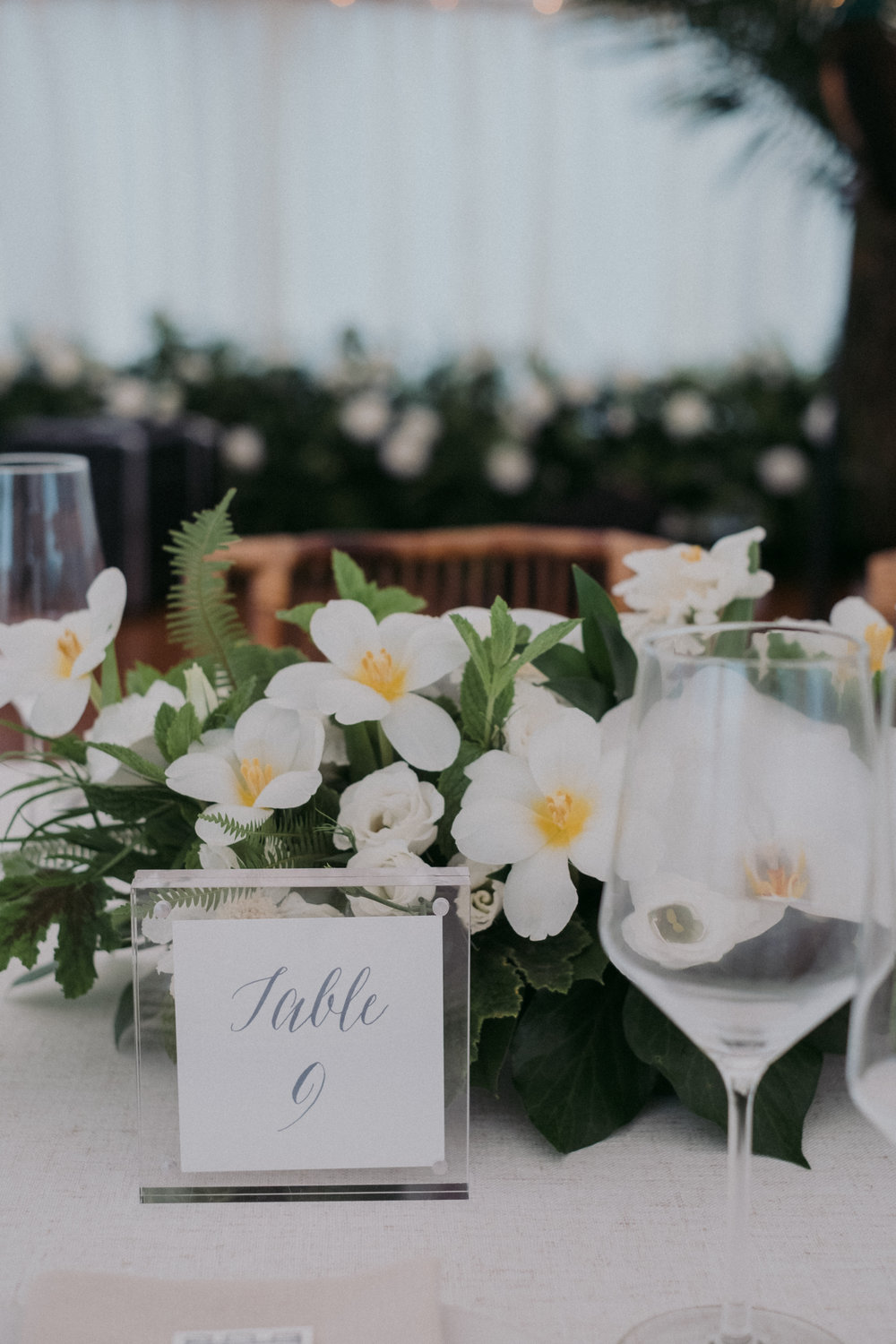 Same Sex Wedding in Provincetown, MA. Destination wedding planned by Nicole Simeral. Coastal Chic Wedding, Travel Wedding, Sperry Sailcloth Tent Wedding, bamboo folding chairs, Belfast linen, whites and greens , straw lantern, centerpiece, tulips, ferns, table numbers, chic