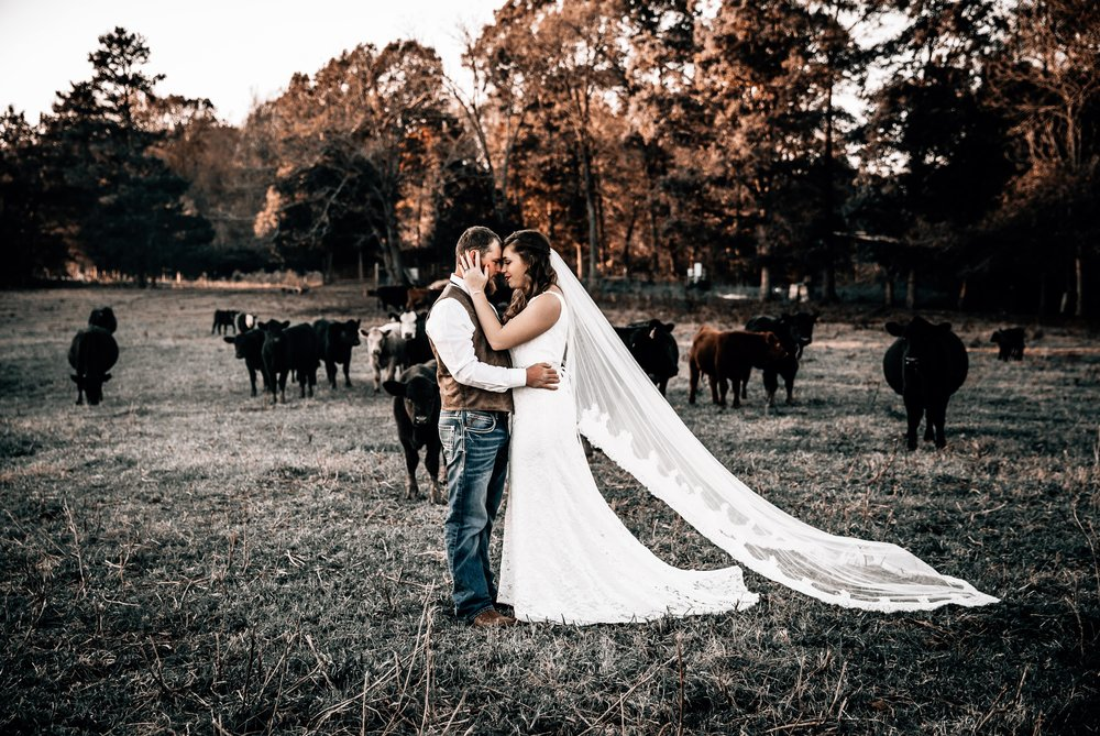 One of my favorite photos ever because I LOVE COWS. & this couple is pretty cute too, right?! ;)