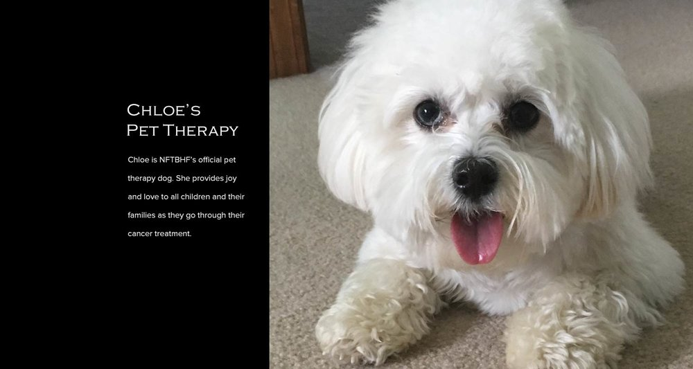 Copy of Chloe Pet Therapy Dog