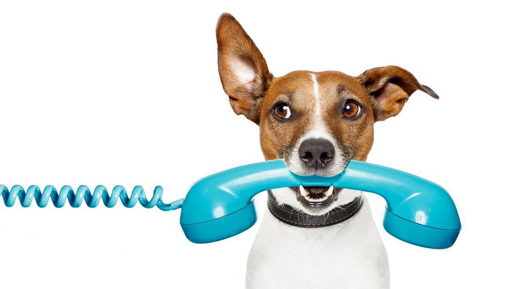 Pet Engine Marketing Schedule Call