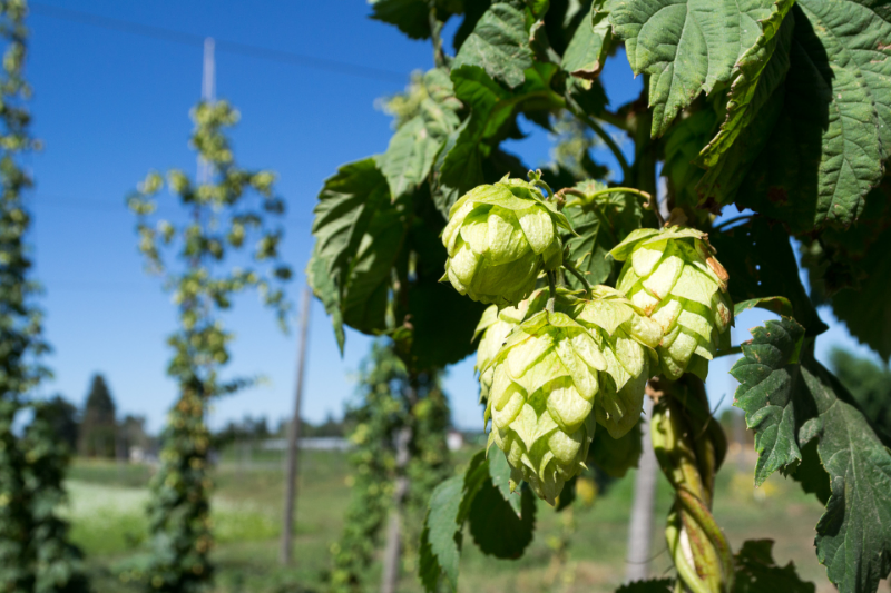 The Brookeville Beer Farm