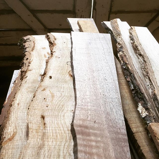 Milling wood today, FRIENDS of INDUSTRY!  Poor Sví wishes she could KEEP the live edges, but the grain!  The GRAIN will still POP when these #beholderbox es are finished. These will be walnut and oak: WAVES ABOUND!  #svíspeaks . . . . #woodworking #woodworker #woodworkerlife #woodgrain #dicebox #polyhedraldice #dice #cards #milling #dungeonsanddragons #dnd5e #dnd #tabletopgames #tabletoprpg
