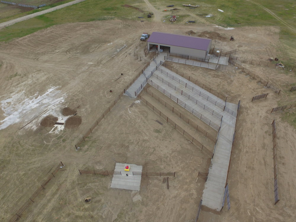 Large feedlot corrals