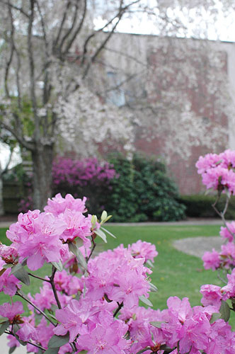 When spring arrives a Bear Hill, our grounds come alive with beautifully manicured rhododendrons, flowering dogwoods, green grass and the first buds on towering oaks, maples and evergreens that are common all around our buildings.