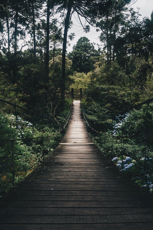 bridge-daylight-environment-775201.jpg