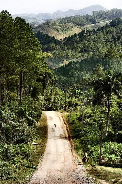 forest-17017_640.jpg