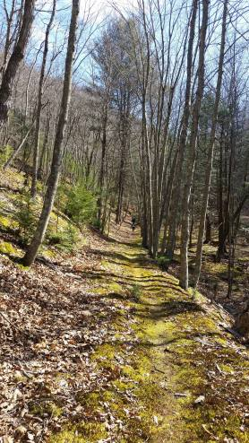 Meditations in Motion: Hyner View Trail Challenge 25k Race Report